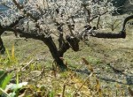 春ですね。1