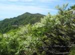 釈迦ヶ岳への稜線