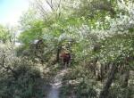 登山道のシロヤシオ